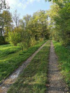 2020-11-09-Rad-und Fußweg nach Bietigheim